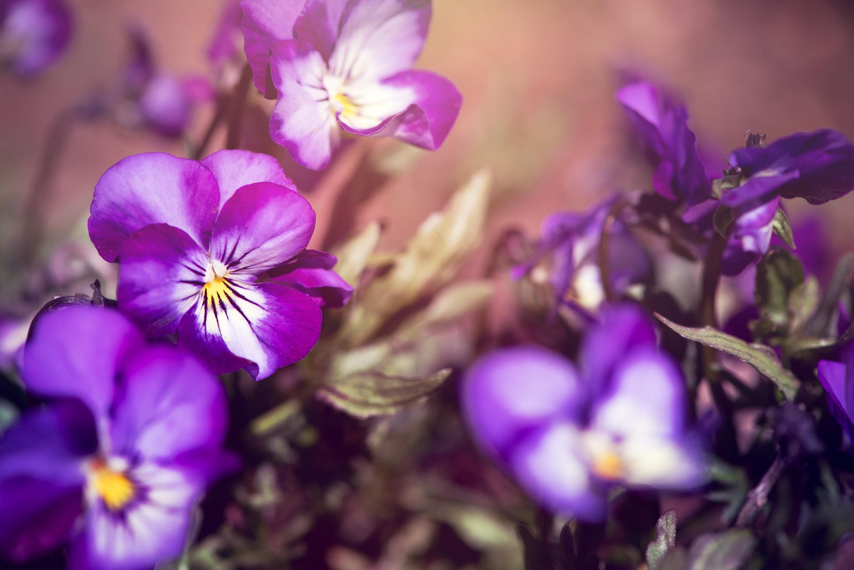 Geburtsblume Februar