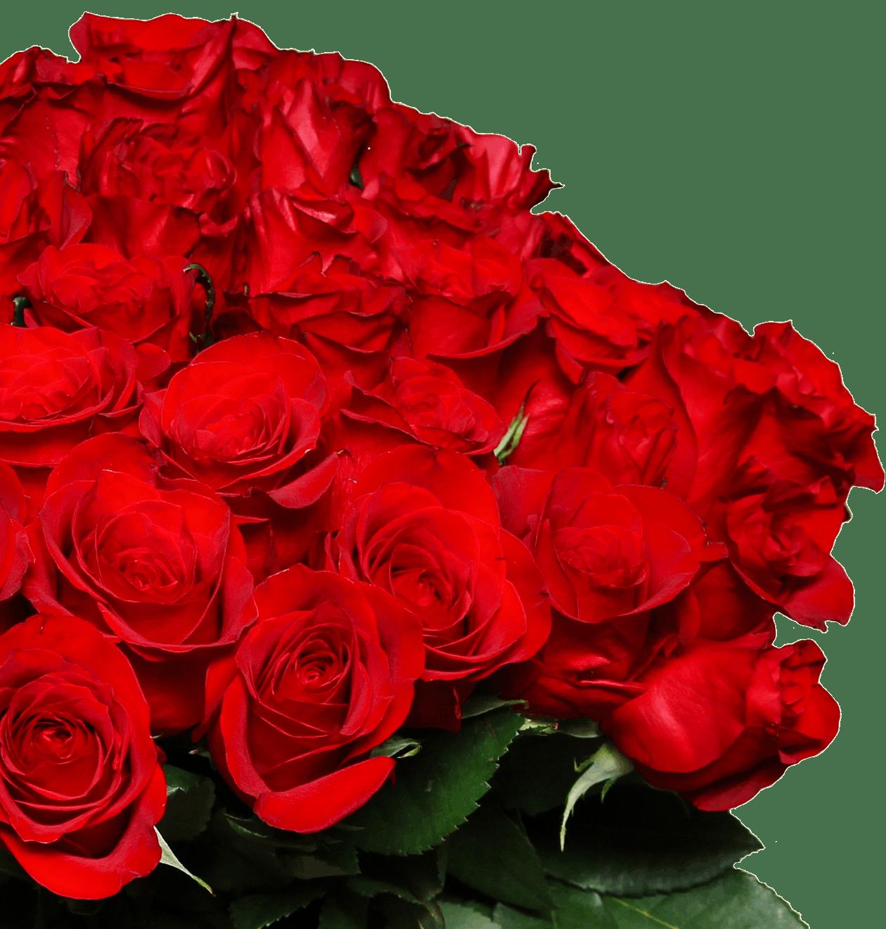 Rote bedeutung 50 rosen 50 rote